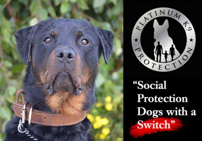 protection dogs with a switch