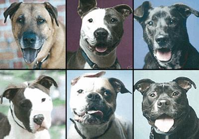 behavior testing shelter dogs
